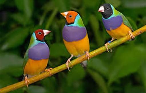 Ευρωπαϊκή Γιορτή των Πουλιών (Eurobirdwatch).