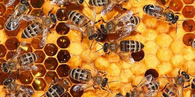 Ο Ε.Α.Σ. συμμετέχει στη πρωτοβουλία για την αναστολή μείωσης μελισσών